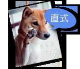菊八開-A4精裝本